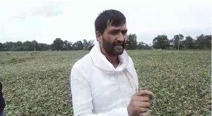 Shajapur Soyabeen Crop