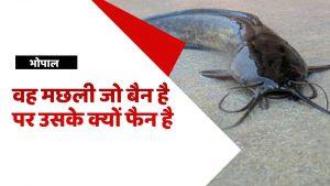 Ban Mangur Fish News